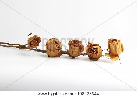 Five Dried Roses On White Background