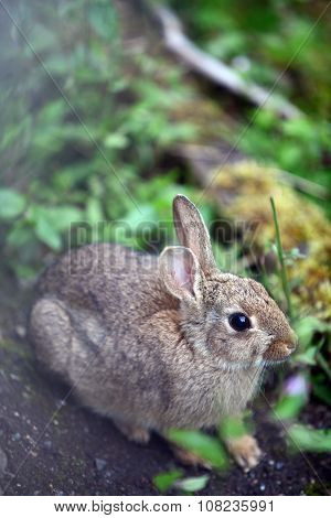 Small Wild Bunny