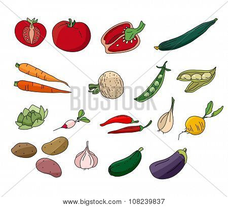 Different vegetables isolated on white. For your design, announcements, postcards, posters.