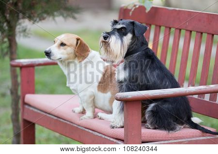 Dogs On Bench
