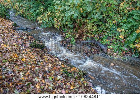 Stream At Seahurst Park 2