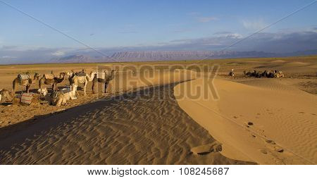 Sahara Desert near Zagora Morocco