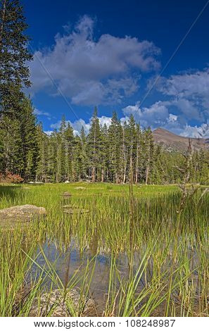 Water Basin In Yosemite National Park Area In California, United States.hdr Image.