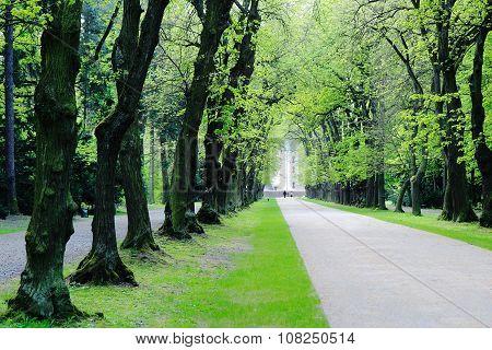 Avenue Of Deciduous Trees In Park