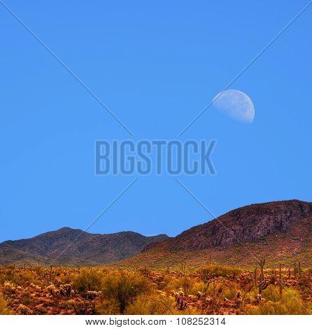 Sonora Desert Moon