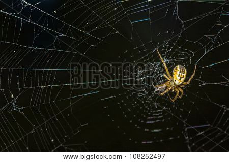 Yellow Spider Webs In The Middle