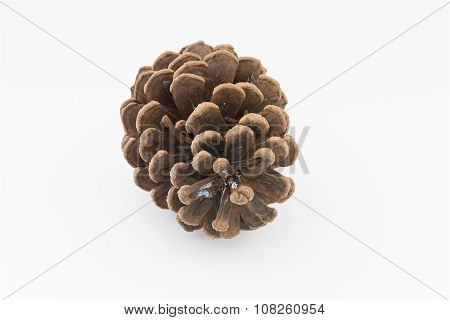 Brown Pine Cone Isolated White Background