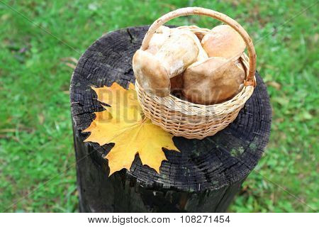 Basket of mushrooms on a piece of wood