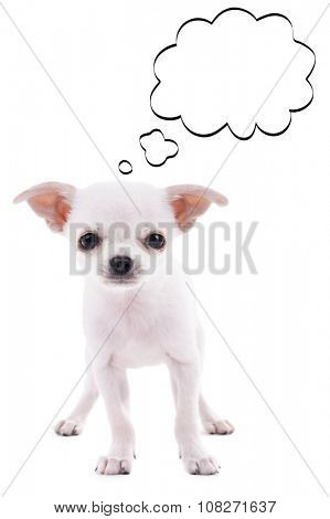 Dog with empty cloud bubble above her head, isolated on white