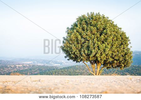 Israeli Tree On Mount Azeka, Judean Mountains.