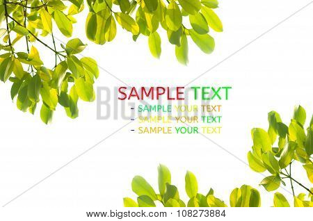 Nature Fram From Green Leaves On White Background. Isolated