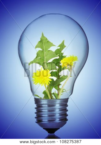 Green eco energy concept. Flowers growing inside light bulb, on blue background