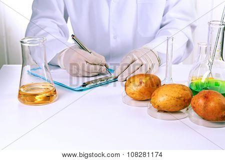 Scientist examines potatoes in laboratory