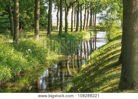 Tall Trees Reflected In A Small Stream