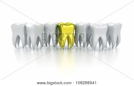 The Human Teeth