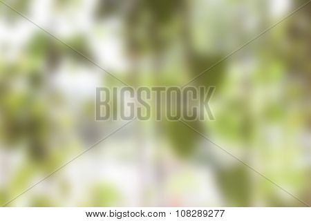Green Blur Abstract Background From Hanging Plant