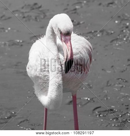 Detailed view of pink flamingo