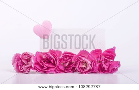 Beautiful Blooming Pink Carnation Flowers On A White Background With Text Space