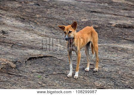 Stray Dog