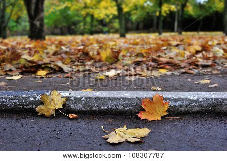Fall, Road, Curb