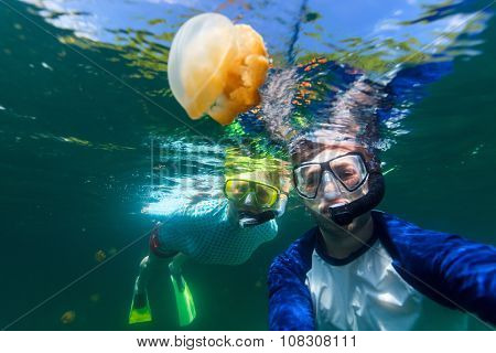Underwater photo of couple snorkeling with endemic golden jellyfish in lake at Palau. Snorkeling in Jellyfish Lake is a popular activity for tourists to Palau.