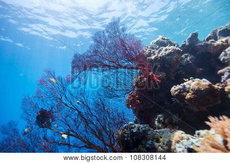 Beautiful colorful coral reef and tropical fish underwater at Palau