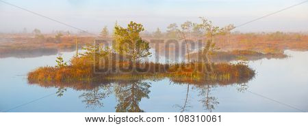 Foggy morning at Yelnya swamp, Belarus