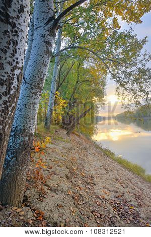 Siret River In Autumn Forest