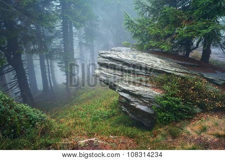 Dark forest with fog in background