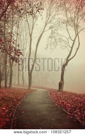 Autumn Foggy Alley  - Beautiful Autumn Landscape