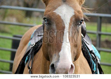 Beautiful image of blue-eyed horse