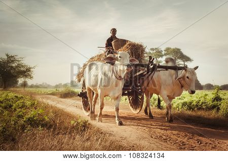 Traditional Village Life In Asian Countryside. Myanmar