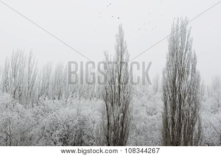Winter Landscape Trees Covered With Snow