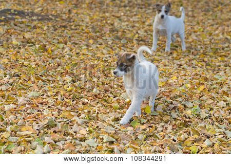 Two cute stray puppies looking for the fun in fall park