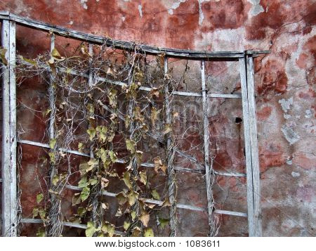 Grunge Wall And Dry Plant