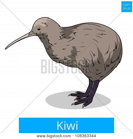 Kiwi learn birds educational game vector