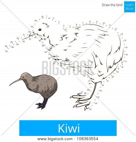 Kiwi bird learn to draw vector