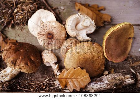 Various mushroom on the ground