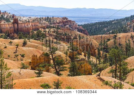 Landscape of red hoodoos in Bryce Canyon