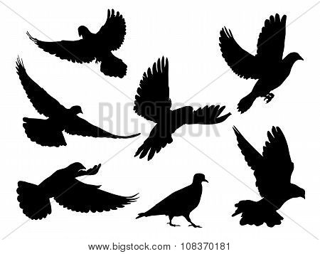 Doves silhouettes