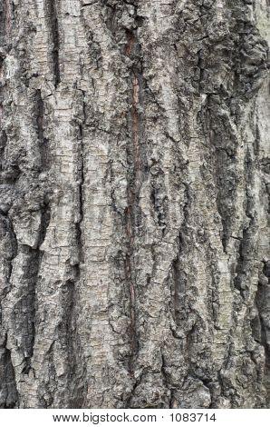 Bark Texture #3