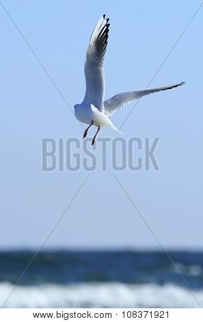 Gull Flies Away
