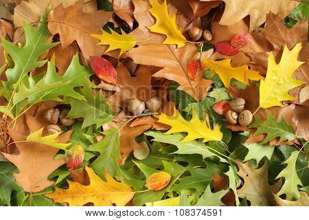 Autumn leaves background - yellow, green, brown oak leaves and acorns