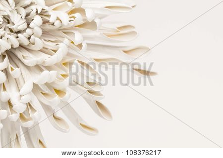 Abstract flower petal background