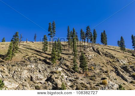 Trees on a hill top.