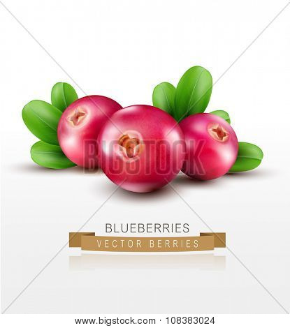 Vector isolated cranberries with green leaves on a white background