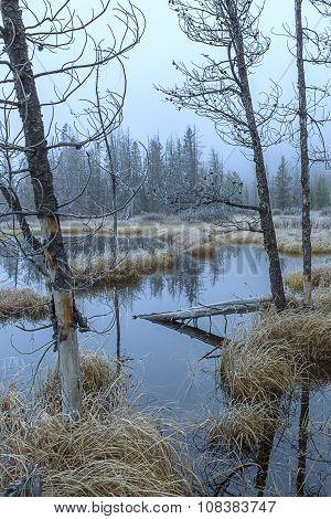 Morning Fog Over The Marsh.