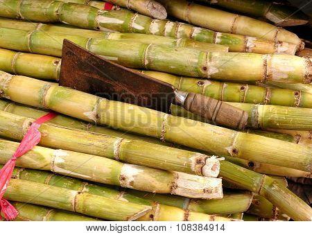 Stalks Of Fresh Sugar Cane
