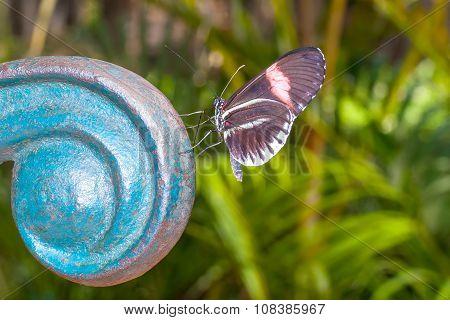 Fragile Red Cattle Heart Butterfly