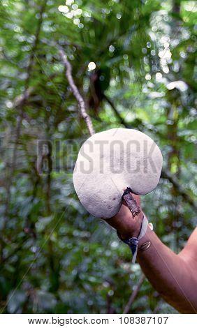 Giant Mushroom, National Park Cuyabeno